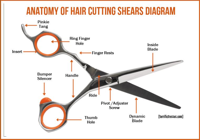 hair cutting shears diagram, anatomy of hair cutting shears, hair cutting shears labeled parts, what kind of scissors to cut hair, best hair cutting shears for home use